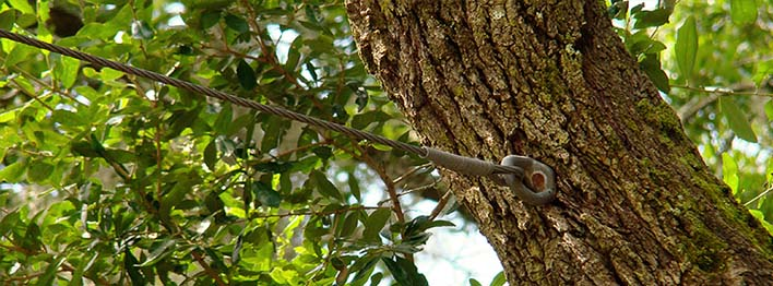 Splitting under the stress of tree hazards?