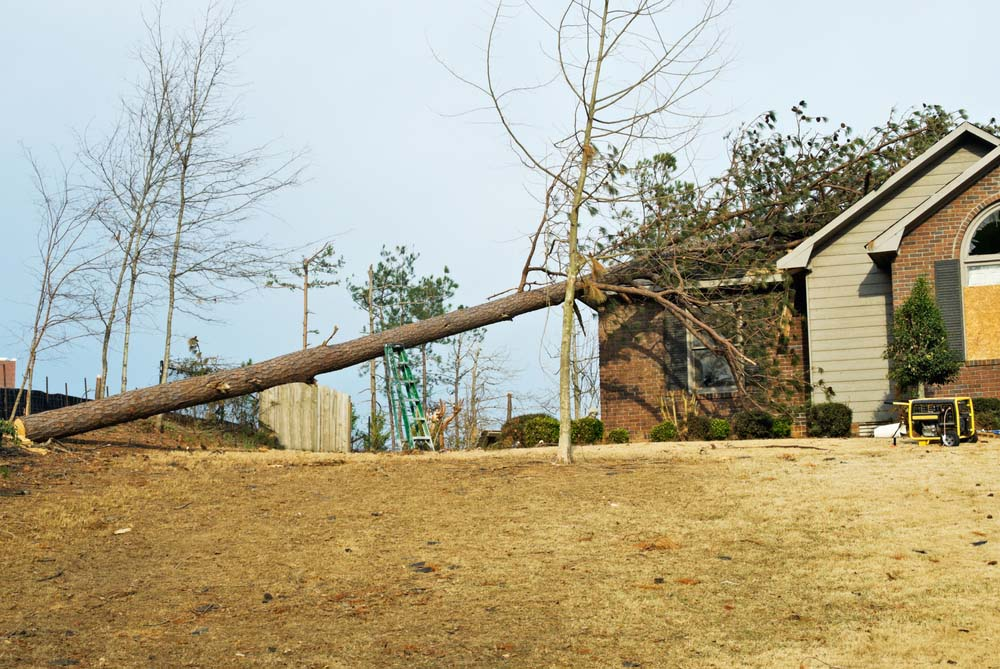 The Price of Tree Care Gone Wrong: Arborist v.s 'Tree Hack'