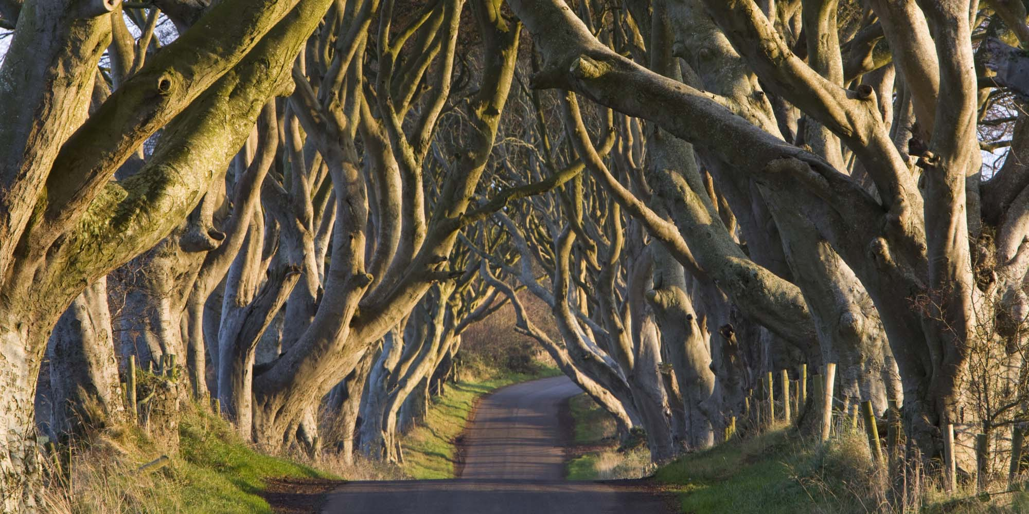 Tree of the Month- The Dark Hedges