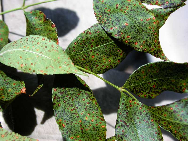 Living with Leaf Spot