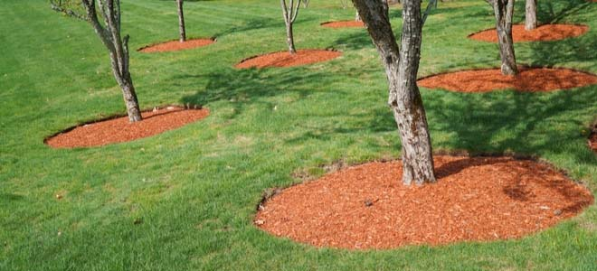 What Do You Need to Know About Mulch?