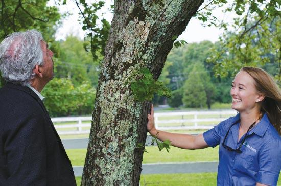 Arborscapes - Richmond VA Tree Service